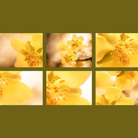Isabel Laurent - Yellow close up