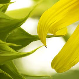 Marina Kojukhova - Yellow Floral abstract
