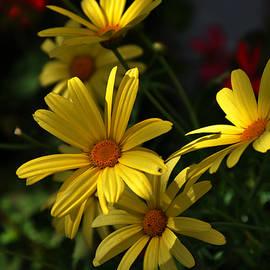 Damijana Cermelj - Yellow flowers