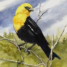 Yellow-Headed Blackbird - Sam Sidders