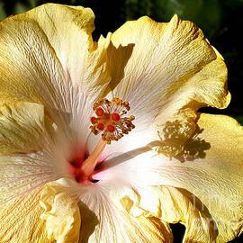 Kaye Menner - Yellow Hibiscus