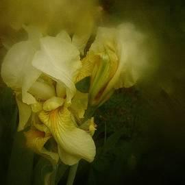 Richard Cummings - Yellow Iris