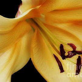 Vickie Emms - Yellow Lily