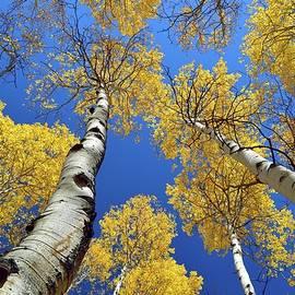 Michael Morse - Yellow Meets Blue