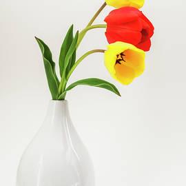 Vishwanath Bhat - Yellow Red and Yellow Tulips