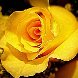 Bonita Brandt - Yellow Rose Bud