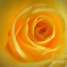 Christy Ricafrente - Yellow Rose