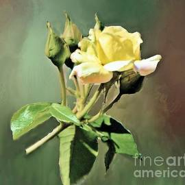 Janette Boyd - Yellow Rose Late Bloomer
