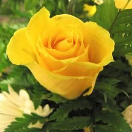 Nancy  Hopkins - Yellow Rose