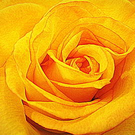 Bonita Brandt - Yellow Rose Orange Trim