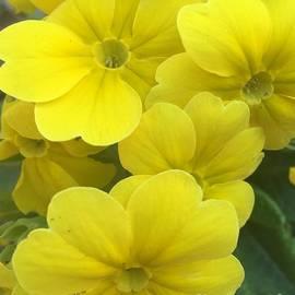 Viktoriya Sirris - Yellow Spring