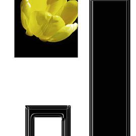 Tina M Wenger - Yellow Tulip 1 Of 3