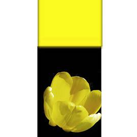 Tina M Wenger - Yellow Tulip 2 Of 3