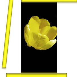 Tina M Wenger - Yellow Tulip 3 Of 3