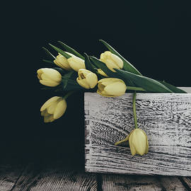 Kim Hojnacki - Yellow Tulips on Black