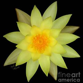 Layla Alexander - Yellow Water Lily square transparent