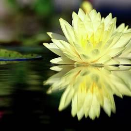 Carol R Montoya - Yellow Waterlily Reflection