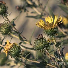 Lucid Mood - Yellow Wild Flowers 1