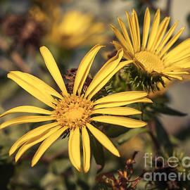 Lucid Mood - Yellow Wild Flowers 2