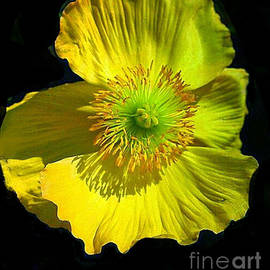 ARTography by Pamela  Smale Williams - Yellow Windflower