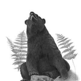 Susan Fraser SCA - Yoga Bear