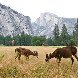 Patricia Sanders - Yosemite