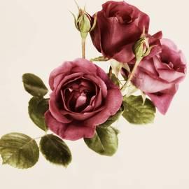 CJ Anderson - You Make Me Blush