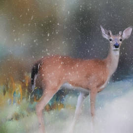 Jai Johnson - Young Buck in The Snow Deer Art by Jai Johnson