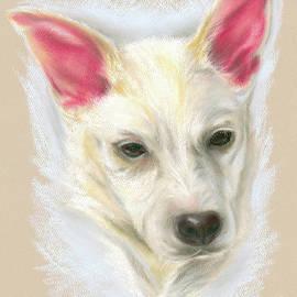 MM Anderson - Young Carolina Dog Portrait