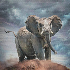 Ronel Broderick - Young Elephant in Pilansberg