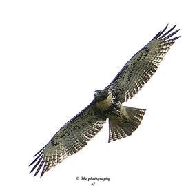 Marc Mesa - Young Hawk