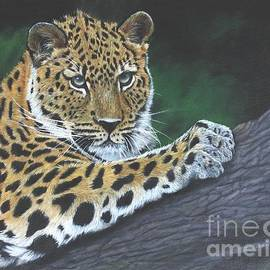 Sid Ball - Young Leopard