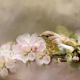 Robert Murray - Young Robin with Blossom