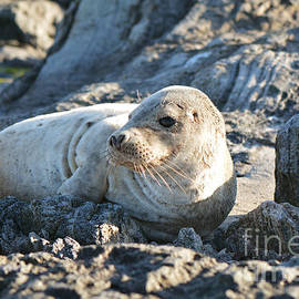 Moira Rowe - Young Seal on beach
