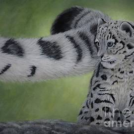 Sid Ball - Young Snow Leopard