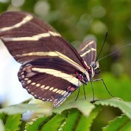 Deepa Sahoo - Your Beautiful Wings