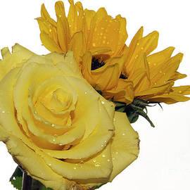 Elvira Ladocki - Ywllow With Yellow