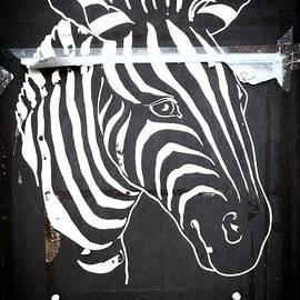 zebra - David Ridley