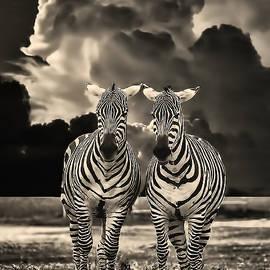 Mark Fuge - Zebra Farewell