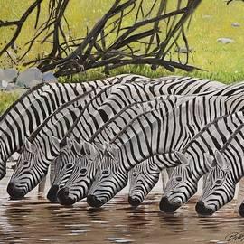 Bill Dunkley - Zebra
