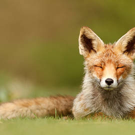 Roeselien Raimond - Zen Fox Series - Born to be Happy