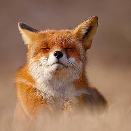 Roeselien Raimond - Zen Fox Series - Smiling Fox
