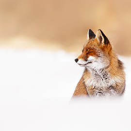 Roeselien Raimond - Zen Fox Series - Zen Fox in Winter Mood