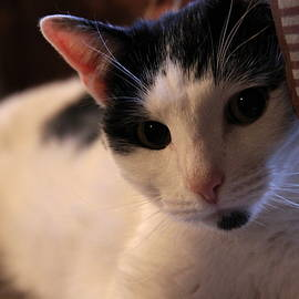 Brian Manfra - Zoe the Cat