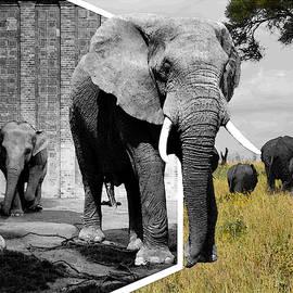 iina  Van Lawick - Zoo Captives