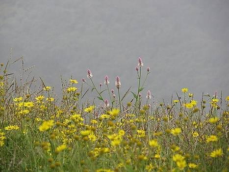 Flower by Adil