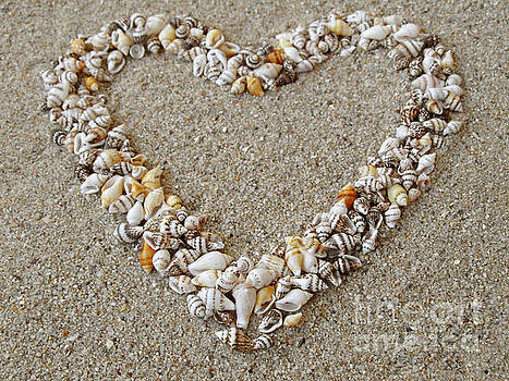 Heart arranged from Seashells by Kiril Stanchev