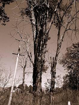 Old Tree by Salman Ravish