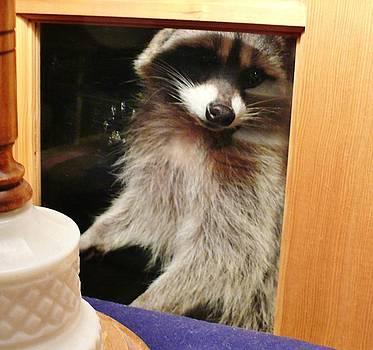 Peek-a-boo Darling Vll by Jacquelyn Roberts