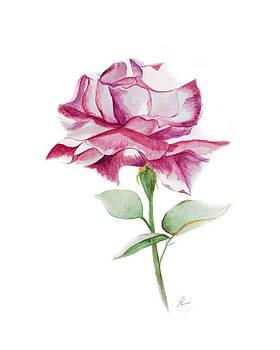 Rose 2 by Nancy Edwards